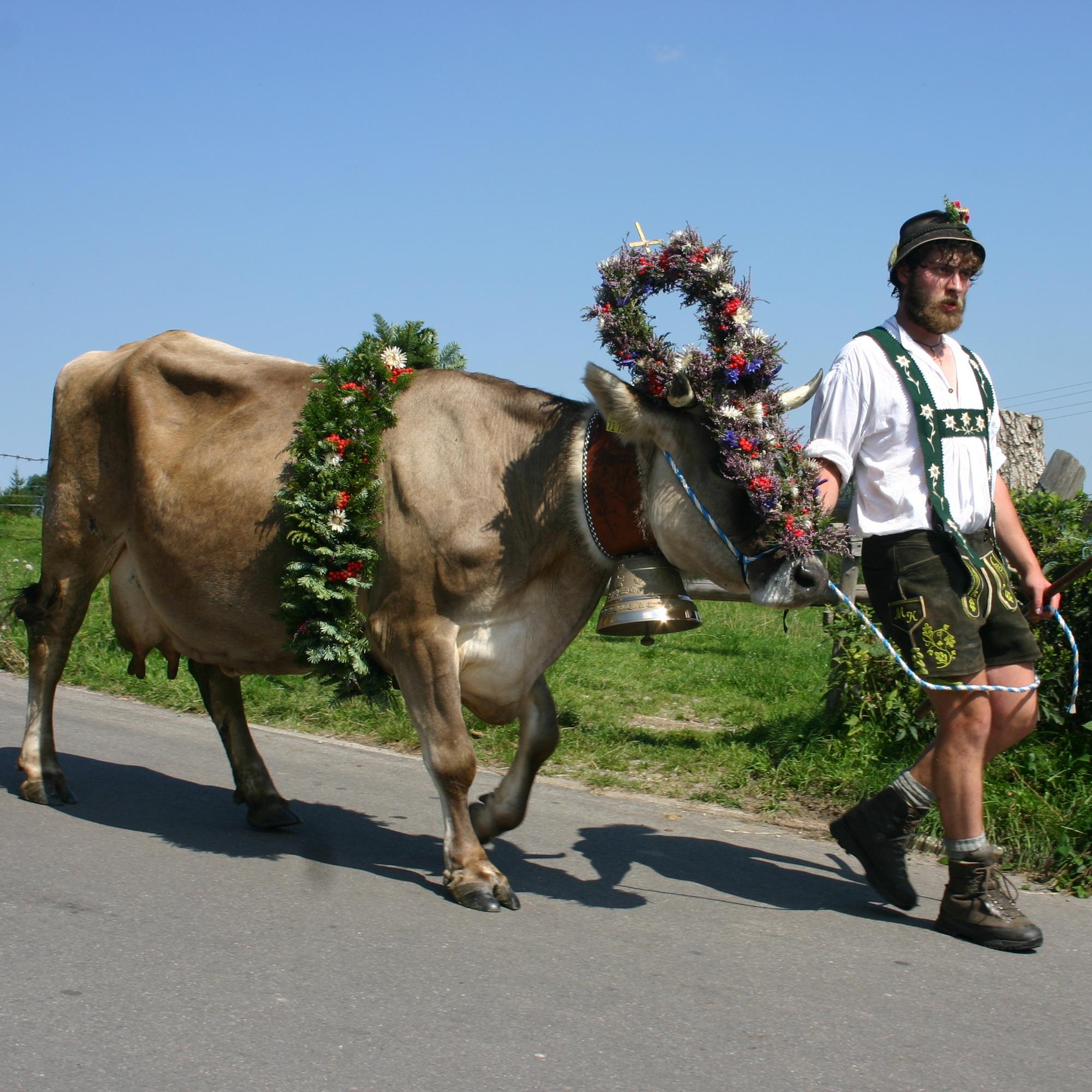 Der Bergbauernwirt Gasthof: Veranstaltungen Viehscheid Bolsterlang