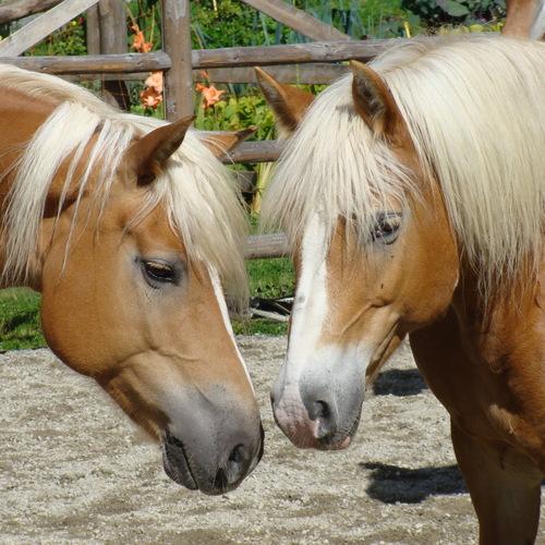 Pferde 084.jpg