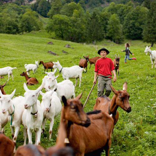 Kinder und Ziegen