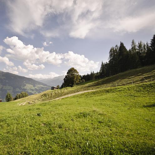 Almlandschaft im Zillertal