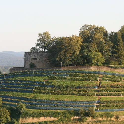 Burgruine Weibertreu