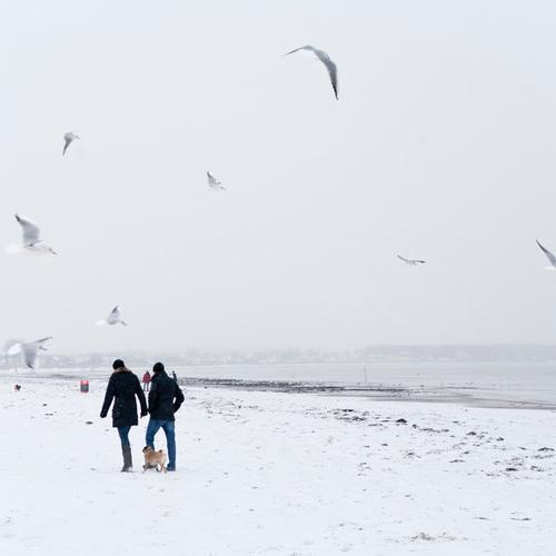 Winterlandschaft Ostseeküste Schleswig-Holsteins