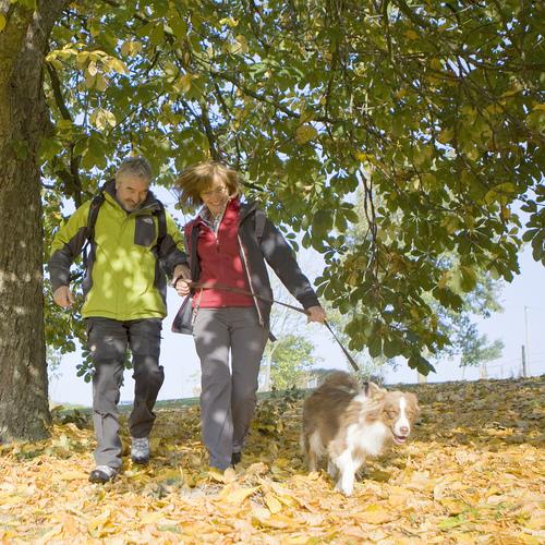 Wandern im Sauerland Herbstwald 2