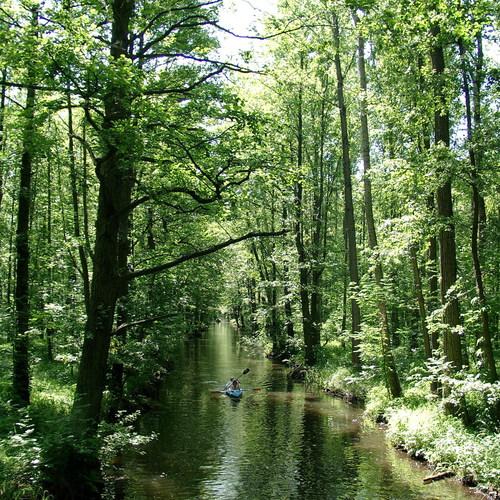 Kanufahren im Spreewald