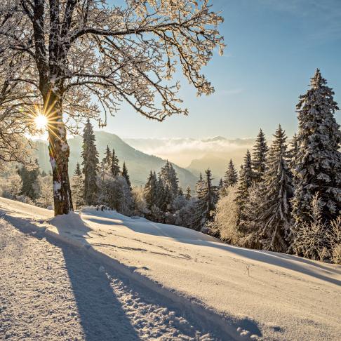 Winterwandern bei Rigi-Kaltbad