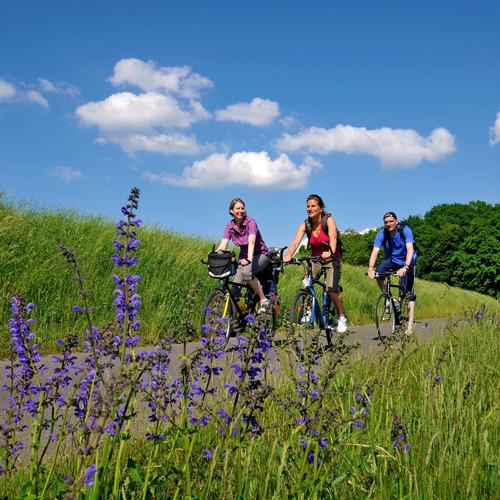 Radfahrer auf dem Oderdeich bei Sophienthal
