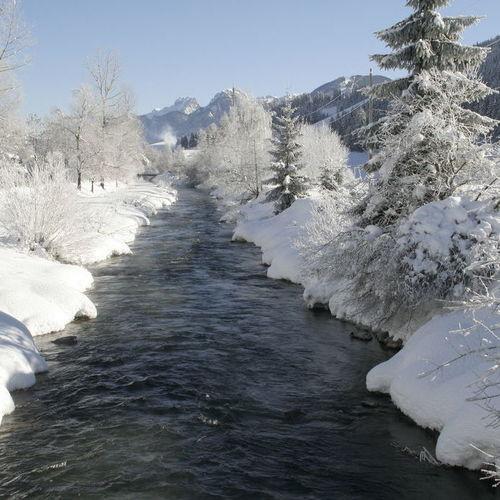 Sillian Winter