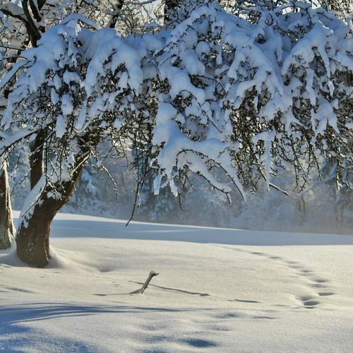 Halblech Winter
