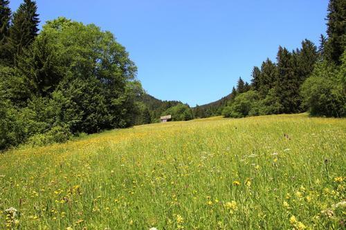 Bergwiese im Vilstal