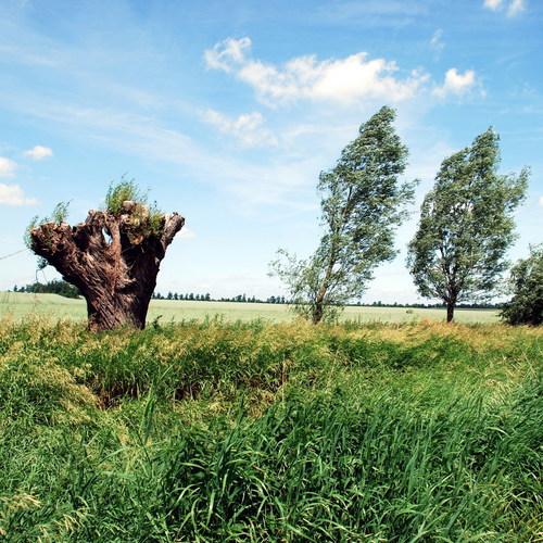 Landschaft Havelland