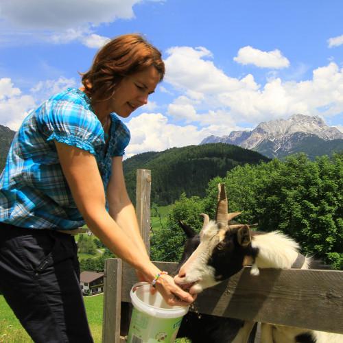 Ziegenfütterung am Ferienhof Obertenn, Hochfilzen