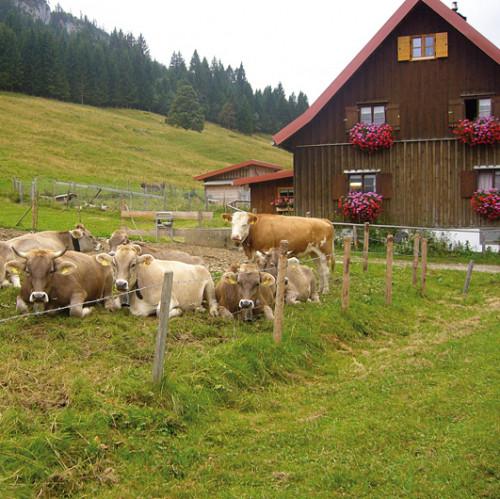 11. Sennalpe Schattwald-Rohrmoos.jpg