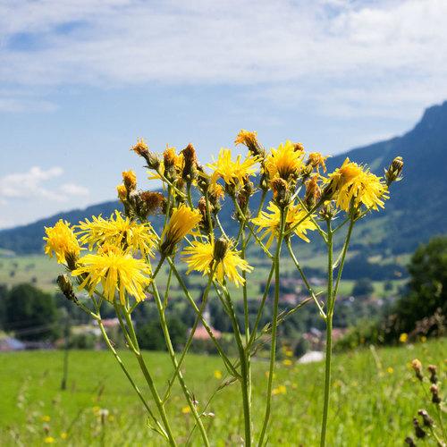 Blaichach, Grünten, Rettenberg
