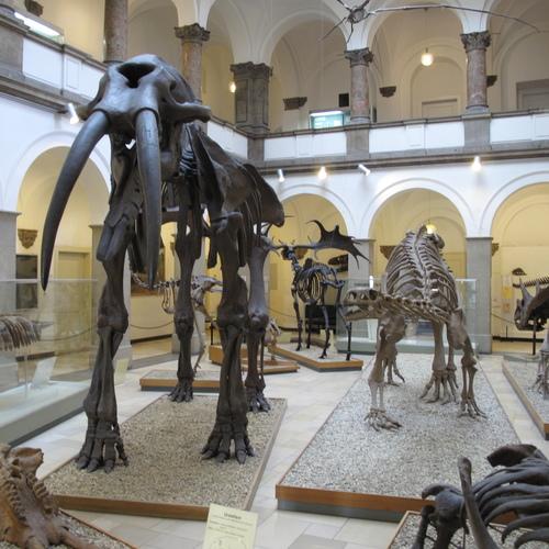 Paläontologisches_Museum_Munich by Schlaier CC BY 3.0.JPG