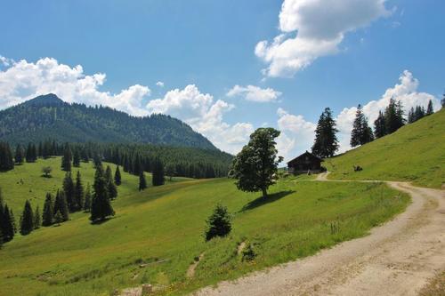 Weg zur Bärenmoosalpe - für Wanderer oder Mountainbiker