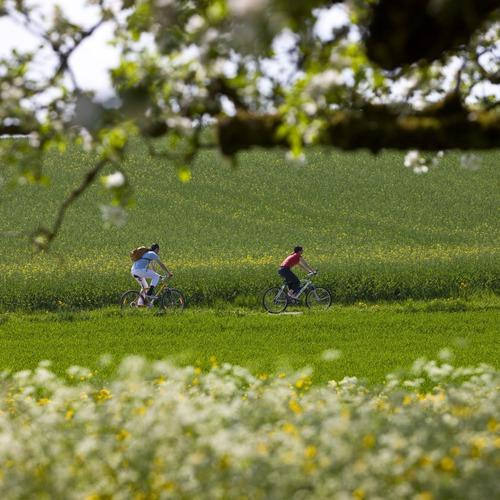 Radfahrer im Bodenseeumland von Überlingen am Bodensee