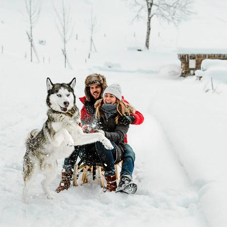 Schlittenhund Adelboden