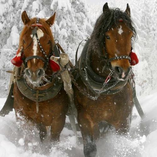 pferdeschlittenfahrt-obertauern.jpg
