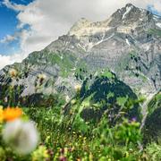 Blumenwiese mit dem Lohner im Hintergrund