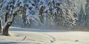 winter-530907_1920.jpg
