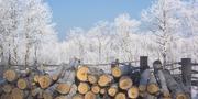 frost-16873.jpg