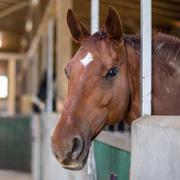 Pferdesport im Sauerland