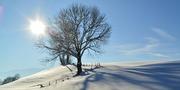 winter-586064_1280.jpg