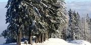 winter-605513.jpg