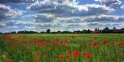 Brandenburg Titelbild_CC0 via pixabay.jpg