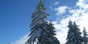 winter-1005480_640.jpg